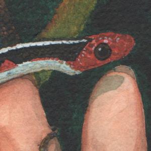Une-poignée-de-serpents_Laedde_3
