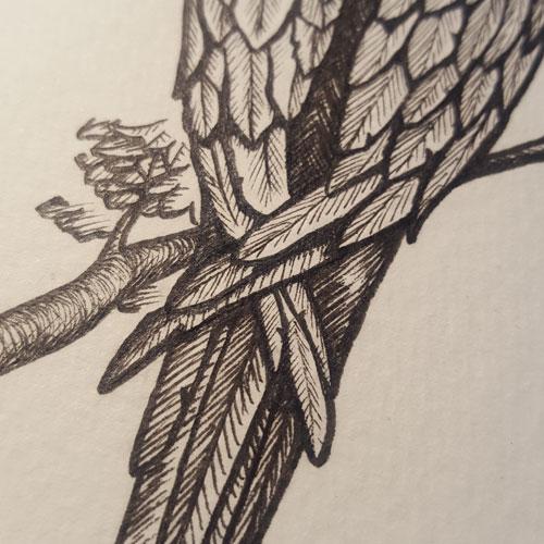 """Ara Bleu et Jaune"", La Mue de l'araignée par L.A. Morgane, illustration de Laedde"