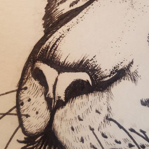 """""""Jaguar (panthera onca""""), La Mue de l'araignée par L.A. Morgane, illustration de Laedde"""